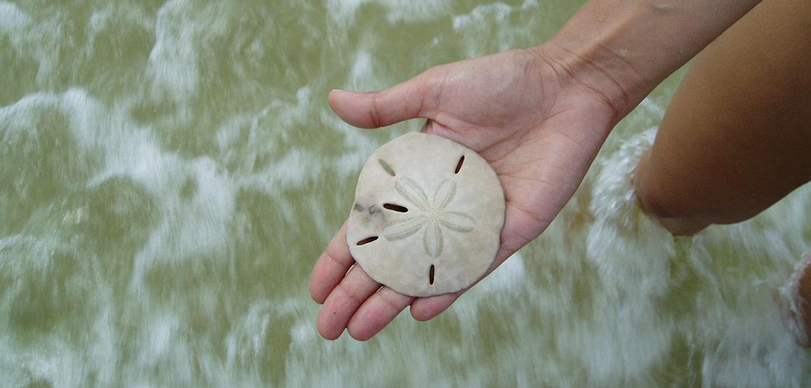 Keewaydin sand dollar
